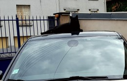 Bruno on the car